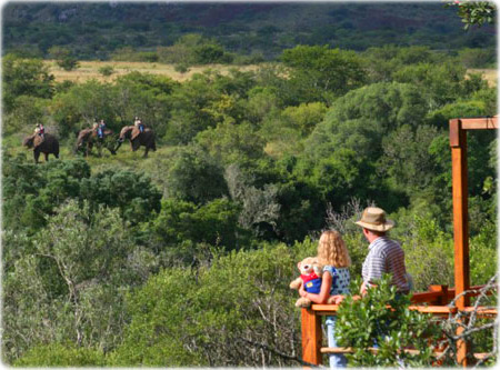 Addo Safari