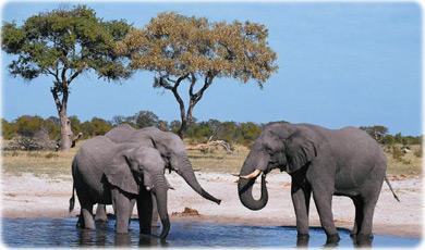 Serengeti National Park >> Parques e Reservas Ambientais da África